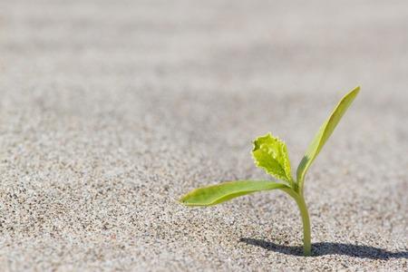 Groene planten kiemen in de woestijn in de Sahara. Spruit in de woestijn.