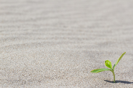 lust for life: Plant sprouting in the desert in Sahara. Sprout in the desert. Stock Photo