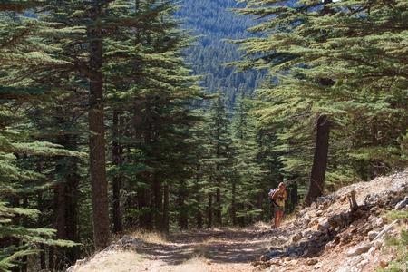 Landweg in cederbos. Berg weg, Turkije, Elmala Stockfoto