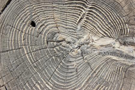 enebro: Textura de madera redonda. Enebro agrietada. Fondo de pino. Foto de archivo