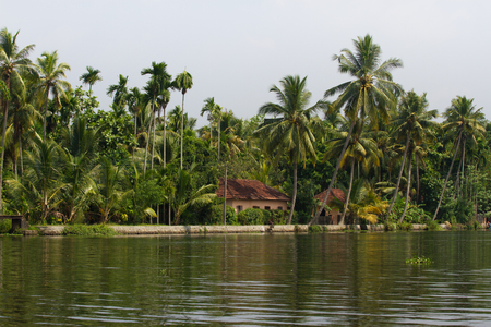 Allepey city on water. Backwaters, rice plantation, coconuts palm mango tree. River landscape