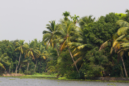 backwaters: Allepey city on water. Backwaters, rice plantation, coconuts palm mango tree. River landscape