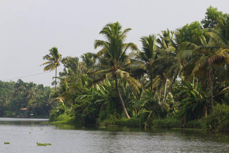Allepey city on water. Backwaters, rice plantation, coconuts palm mango tree. River landscape Stock Photo