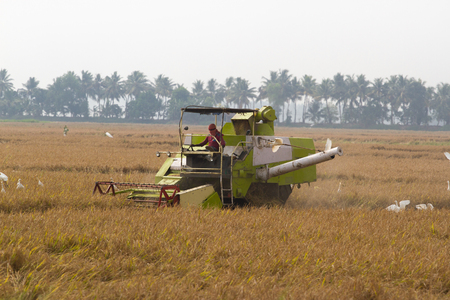 alappuzha: Allepey, Kerala, India, March 31, 2015: Unidentified man with Harvester machine harvest rice in field