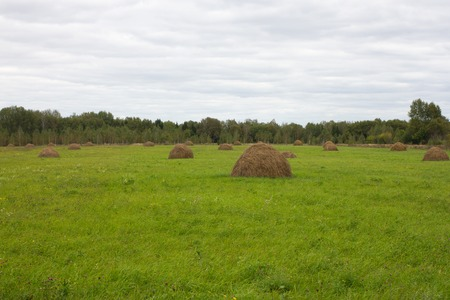 animal feed: Green field with hay groups. Mop, agricultural for animal feed, Ukraine countryside view Stock Photo