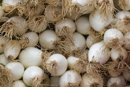cebolla blanca: bulbos de cebolla blanca. Dientes de verduras picantes orgánicos Foto de archivo