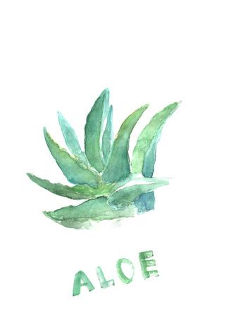 aloe vera plant: Green blue hand drawn paint of aloe vera. Tequila watercolor illustration. Medical plant Stock Photo