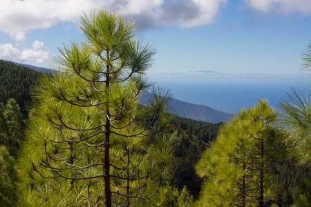 Spruce forest. Stock Photo