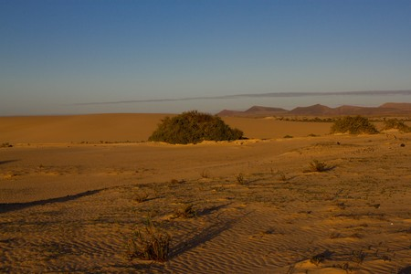 mountain oasis: Yellow sand on desert landscape. Panorama view. Fuerteventura, Canary islands Stock Photo