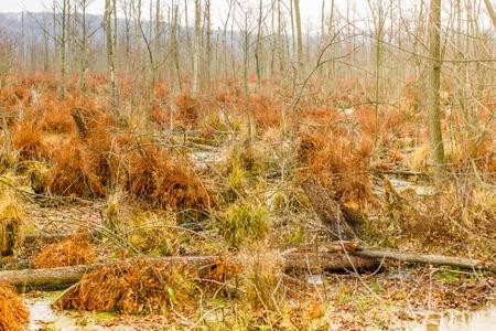 Autumn peat bog landcape. Swamp, marsh wild area. Beautiful nature Stock Photo