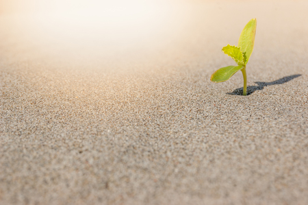 The seedling are growing from the rich soil to the morning sunlight that is shining, Ecology , business