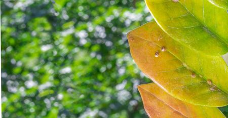 Macrophotography of Diaspididae insects on leaf vessel. Armored scale insects at home plants. Insects sucking plant. Infested. Copy space photo