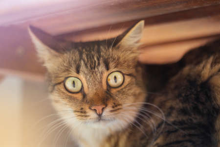 Brown cat with big yellow eyes under table with light.