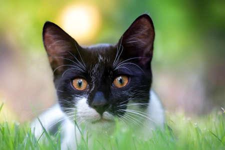 Black cat on green lightening background