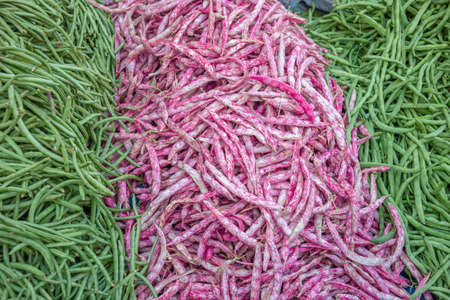 Fresh pink and green colored string beans background. Vegetarian food ingredients.