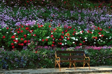 roses in the garden: Bench beside Rose Garden