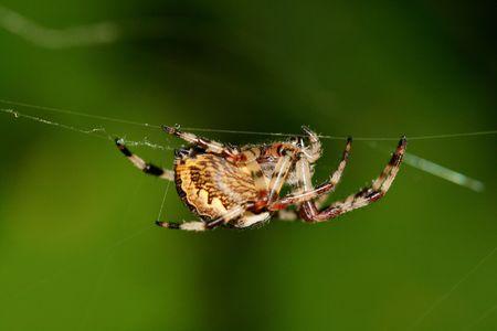 spider Stock Photo - 2094567