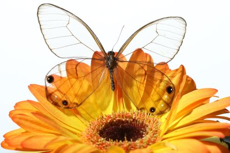 holyday: butterfly on the flower valentine holyday beautiful card to my love