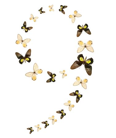 Nine number butterfly show isolated photo