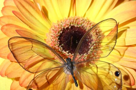 very butterfly on beautiful yellow flower photo