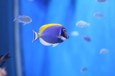 picture of tropical fish close up swim wildlife Stock Photo - 2528987