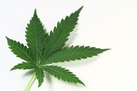 reggae: cannabis isol� sur blanc de amsterdam