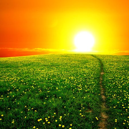 sunrise yellow colorful clouds and  dandelion field  photo
