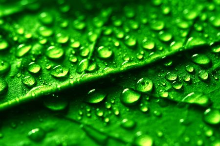 waterdrops on green plant leaf macro Stock Photo - 3178302