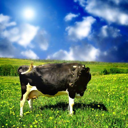 cow on green dandelion field Stock Photo - 3222019
