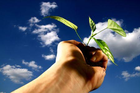 replant: mano nuova vita vegetale attenzione concetto Archivio Fotografico