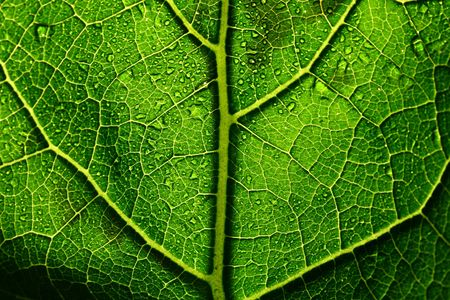 green leaf structure macro close up Stock Photo