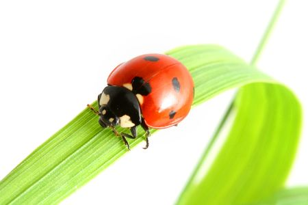 red summer ladybug on green grass photo