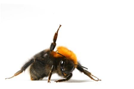 dance aerobic bumble bee isolated on white background photo