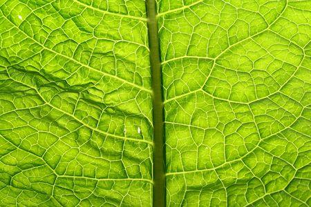 summer green leaf macro close up Stock Photo - 3295847