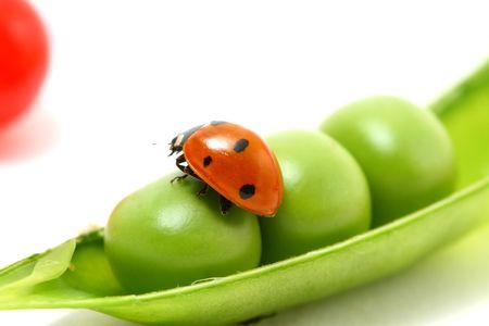 ladybug gourmet currant and peas on white photo