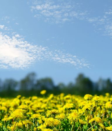 lanscape: dandelion field green and yellow colors lanscape