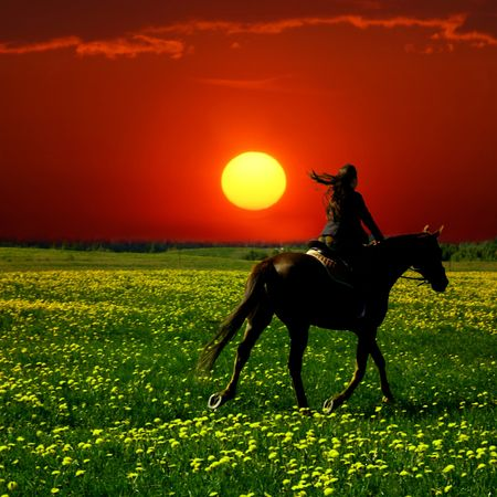 racehorses: paard ruiter in het groen paardebloem veld