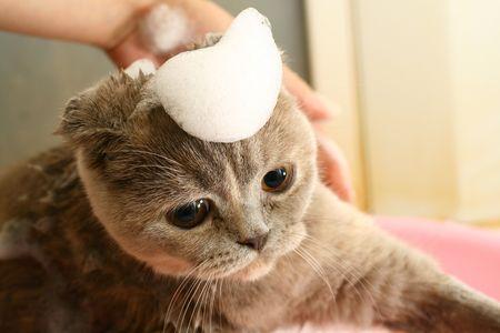 take a bath: wash cat under water wet  Stock Photo