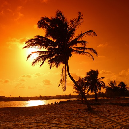 palm in yellow sunrise sky Stock Photo - 4212427
