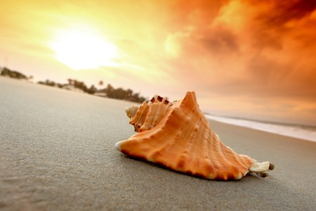 mexico beach: shell on sand under sunset sky Stock Photo
