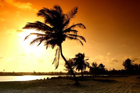 palm in yellow sunrise sky Stock Photo - 4274833