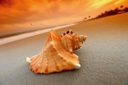 shell on sand under sunset sky Stock Photo - 4304789