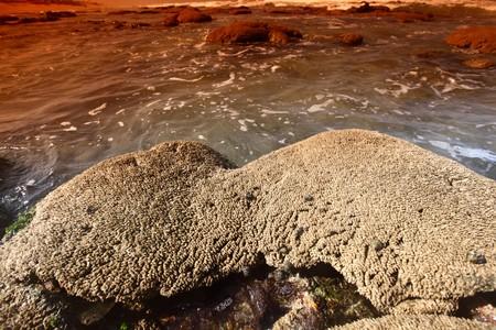 Reef stones an ocean water Stock Photo - 4324549