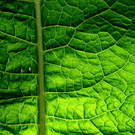 summer green leaf macro close up Stock Photo - 4596068