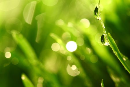 water drops on grass blade nature background photo