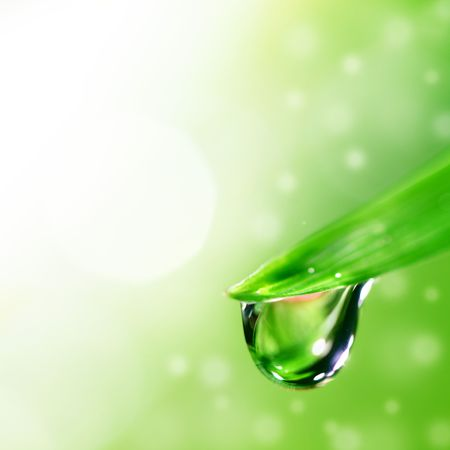 wet leaf: big water drop on grass blade Stock Photo
