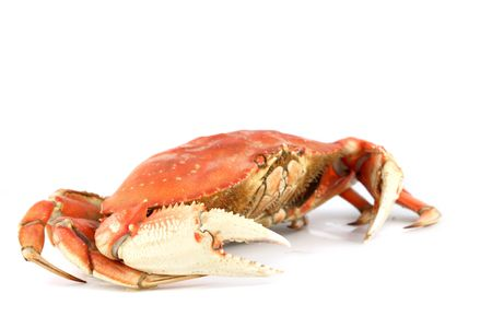 dungeness crab isolated on white Stock Photo - 4644336