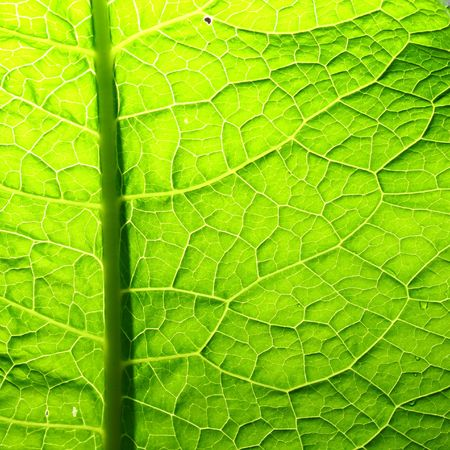 summer green leaf macro close up Stock Photo - 4670987