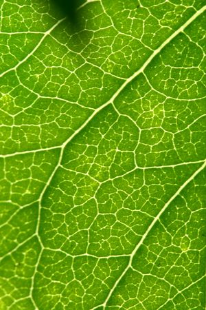 green leaf beautiful nature background Stock Photo - 4689227