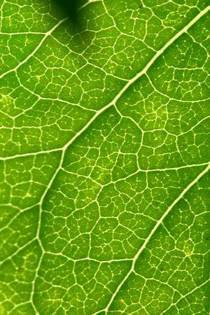 green leaf beautiful nature background Stock Photo - 4689227